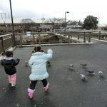 愛知県一宮市の「浅井山公園」に子供と一緒に行ってきました。2017