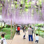 愛知県江南市の花の名所「曼陀羅寺公園」