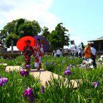 愛知県一宮市の花の名所「萬葉公園 高松分園」