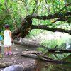 岐阜県笠松町の子供の遊び場「笠松トンボ天国」