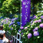 愛知県稲沢市の花の名所「大塚性海寺歴史公園」