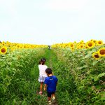 ヒマワリ畑で遊ぼう!|岐阜県羽島市の花の名所「いちのえだ田園フラワーフェスタ」