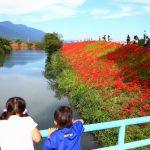 岐阜県海津市の花の名所「津屋川堤防の彼岸花」