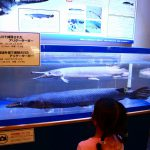 愛知県碧南市の子供の遊び場「碧南海浜水族館」