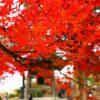 愛知県犬山市の観光名所「犬山寂光院」