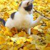 愛知県稲沢市の黄葉スポット「そぶえイチョウ黄葉まつり」