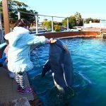 愛知県美浜町の子供の遊び場「南知多ビーチランド」