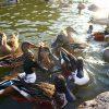 静岡県掛川市の子供の遊び場「掛川花鳥園」