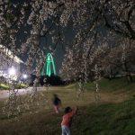 「木曽川堤」の夜桜を見に行ってみました。