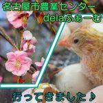 愛知県名古屋市の子供の遊び場「名古屋市農業センターdelaふぁーむ」。梅まつりやふ化したてのヒヨコなど。